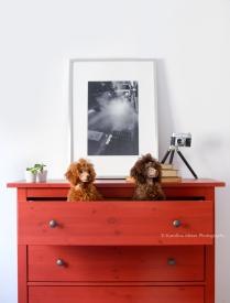 ©Karolina Moon Photography. Alma & Chloe Reportage and pet portrature.