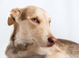 NEUSCA & JUDIT Retrato mascotas. #RetratoMacotas #FotografaMascotas