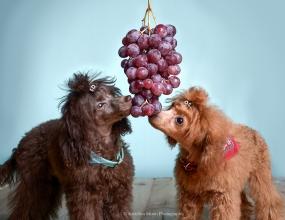 ©Karolina Moon Photography. Pets and Food Series. Reportage and pet portrature.