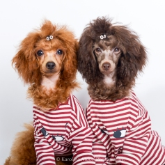 Fashion for Dogs.