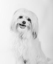 PET PORTRATURE ©Karolina Moon Photography.