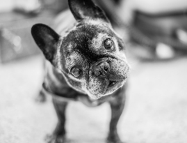 FRODO- The Unic and charismatic old Frodo... // RETRATO MASCOTAS #RetratoMacotas #FotografaMascotas