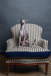 Karolina Moon Photography. Retratista animal y reportaje. / Karolina Moon Photography. Animal portrait. Reportage.